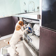 Dog licking dishes in the dishwasher