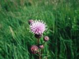 flower spines - 173782467