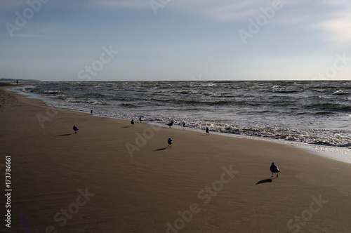 Widok kolorowy morze bałtyckie przy jesienią.