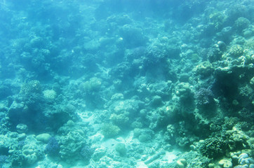 Underwater landscape with corals