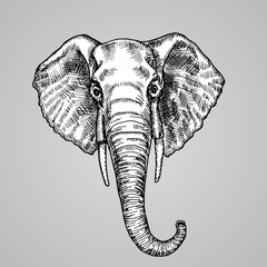 Black and white engraving style. A beautiful Indian animal in the sketch style. Vector illustration.