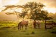 Horses Grazing at Sunset - 173847467