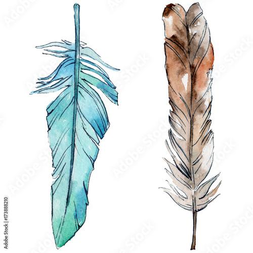 aquarellvogelfeder-vom-flugel-getrennt-aquarelle-feder-fur-hintergrund-textur-wrapper-muster