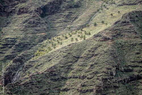Fotobehang Canarische Eilanden La Gomera Lo Del Gato Benchijigua
