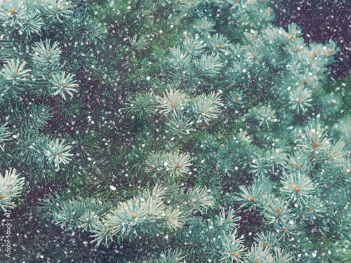 Foto Murales Snow fall in winter forest. Christmas new year magic. Blue spruce fir tree branches detail.