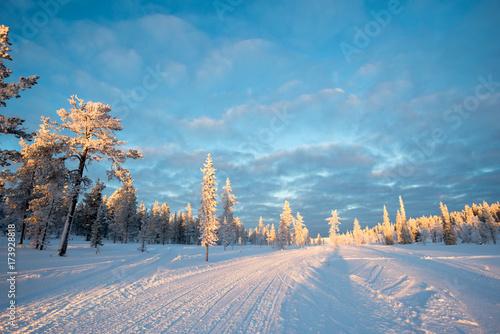 Deurstickers Blauw Snowy landscape, frozen trees in winter in Saariselka, Lapland, Finland