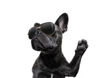 posing dog with sunglasses high five - 173952403