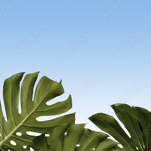 pattern of monstera leaves Poster