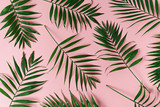 green leaves of palm tree - 173962696