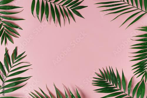 zielone liście palmy