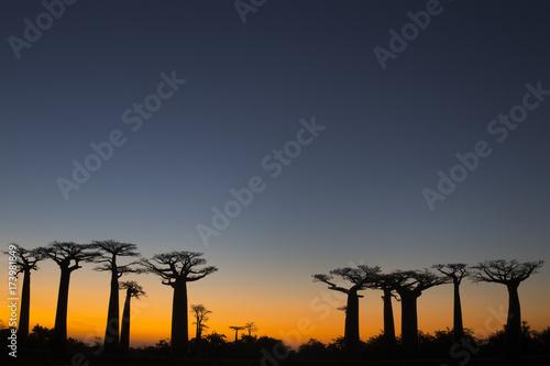 Papiers peints Baobab Baobab Baeume im Sonnenuntergang