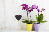 Two orchids (Phalaenopsis ) and heart