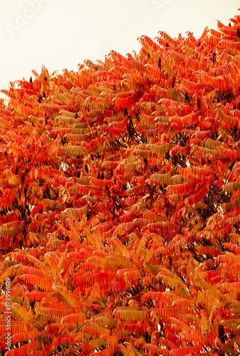 Herbstlaub - 173996619