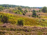 blühende Heide in Bispingen