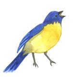 A little cute blue bird, watercolor illustration