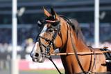 cheval de courses - 174048041
