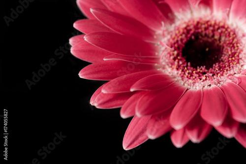 Aluminium Gerbera Pink Gerbera Daisy
