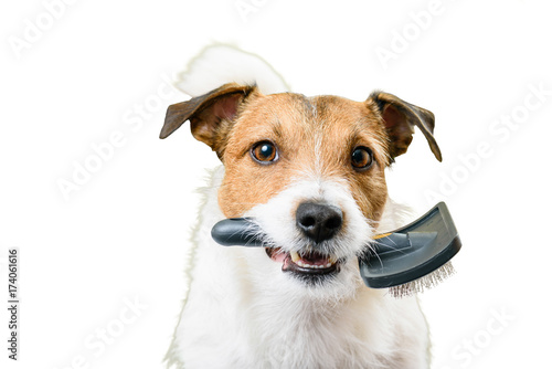 Fototapeta Hairy dog needs grooming and haircut isolated on white