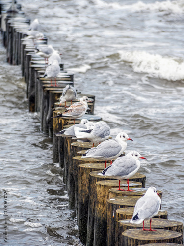 Plagát Seagulls on wooden water breakers