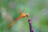 Dragonfly on a green background - 174139479