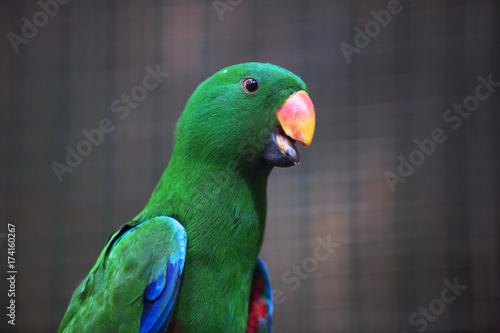 Aluminium Papegaai green parrot 2