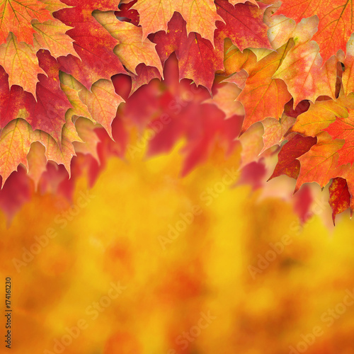Abstract Autumn Background Border with Fall Leaves - 174161230