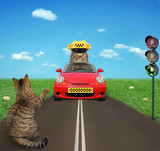 The cat is he trying to catch a cab near the traffic light. - 174161474