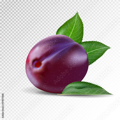 Fresh plum on transparent background. Realistic vector.