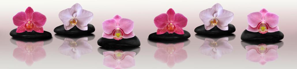 Orchid on the rocks © savojr