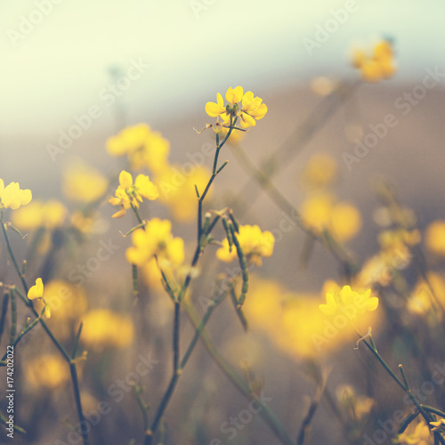 vintage yellow flowers nature spring background