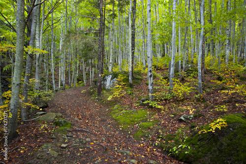 Keuken foto achterwand Weg in bos Sentiero nel bosco