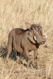 Safari en Namibie - 174240820