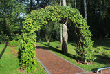Garden arch made of intertwined oak branches - 174241475