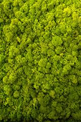 Moss als grafisches element oder Hintergrund © bevisphoto