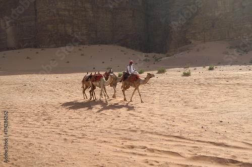 Fotobehang Kameel Kamele