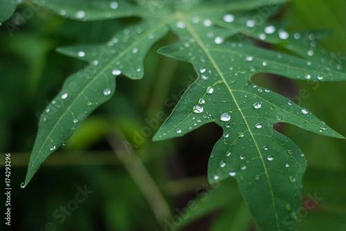 Raindrops on leaves after rain