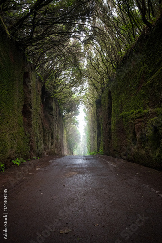 Foto op Aluminium Canarische Eilanden Road and the moss wall in the Anaga Rural Park, Tenerife, Canary Islands, Spain.