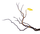 dry branch with leaf - 174312221