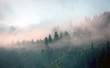 morning mist in mountain forest - 174339043