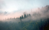 Fototapeta Landscape - morning mist in mountain forest © Pavel Klimenko