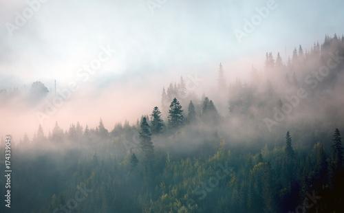 Fototapeta morning mist in mountain forest