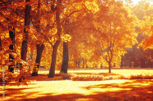 Staande foto Oranje eclat Autumn landscape, autumn park in with golden autumn trees in sunny weather
