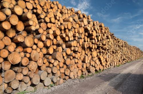 Viele Baumstämme, Brennholz auf Lagerplatz Poster