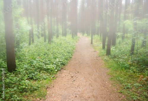 Foto op Canvas Weg in bos path in the foggy forest