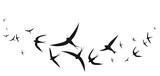 beautiful bird,black silhouette, on a white