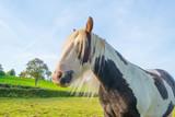 Pony in a meadow in sunlight in autumn - 174359218