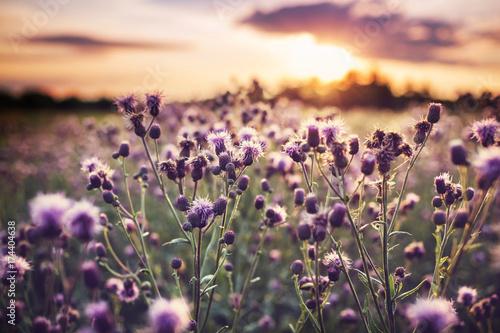 Fotobehang Galyna A. Flowers meadow
