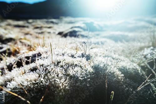 Fotobehang Galyna A. Frozen meadow