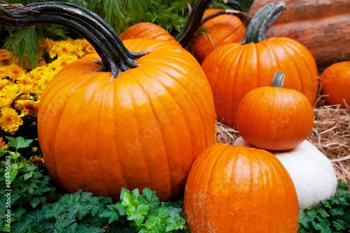Fotobehang Galyna A. Pumpkin