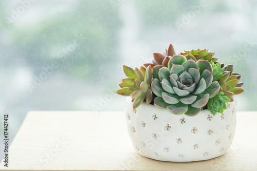 Gliniany garnek kolorowa kwiatonośna tłustoszowata domowa windowsill roślina